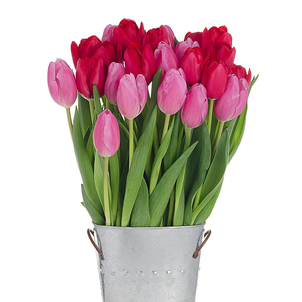 Grown not flown an american grown valentines day slowflowers american grown flowers by mail stargazer barn arcata california top spring tulips are a fresh seasonal alternative to imported long stemmed roses izmirmasajfo