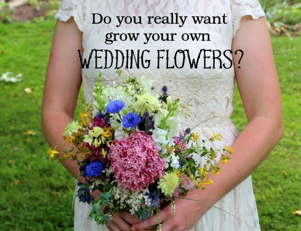 essay slowflowers journal do you really want to grow your own wedding flowers