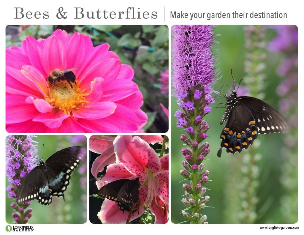 Clockwise from top left: Border Dahlia Bellini; Liatris Blazing Star; Lily Stargazer and Liatris Blazing Star