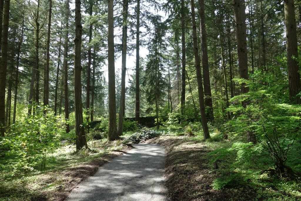 The Entry Path. RSBG Has Been Housed At The (now Former) Weyerhaeuser Corp.  HQ Since The 1970s. Trees Define This Place.