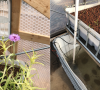 Grateful Gardeners_aquaponics